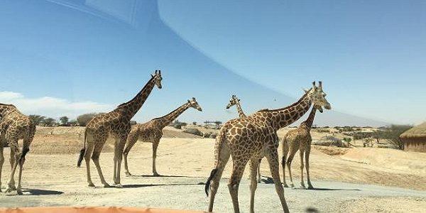 Al Ain City Tour Places