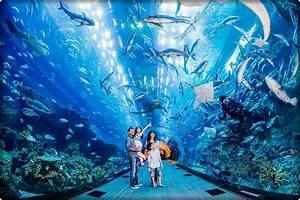 Dubai Aquarium Tour